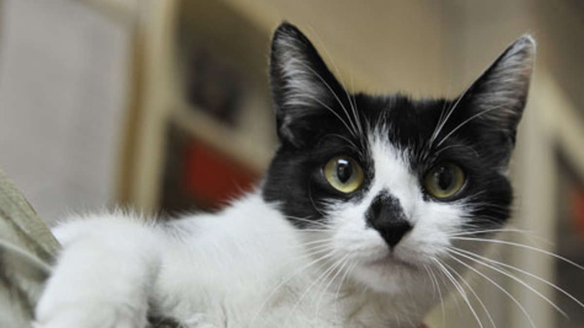 mietrecht vermieter darf katzen in der wohnung nicht verbieten wohnen. Black Bedroom Furniture Sets. Home Design Ideas