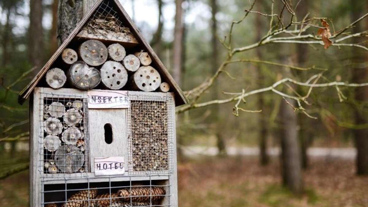 standort bis material anleitung f r ein insektenhotel wohnen. Black Bedroom Furniture Sets. Home Design Ideas