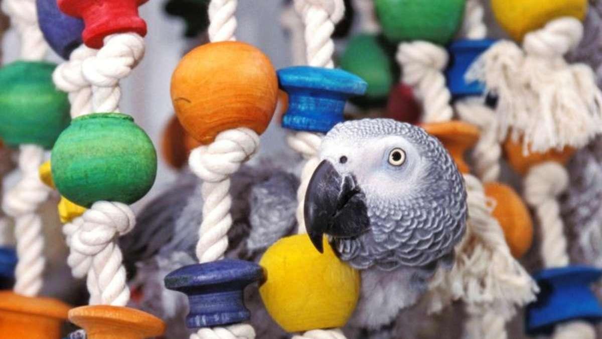 kluger vogel schlau besch ftigt spielzeug f r papageien tiere. Black Bedroom Furniture Sets. Home Design Ideas