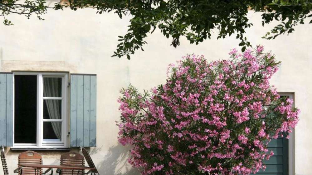 nasse f e und viel d nger der oleander speist ausgiebig. Black Bedroom Furniture Sets. Home Design Ideas