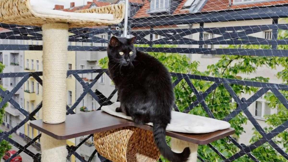 frei oder sicher wann und wie katzen freigang haben. Black Bedroom Furniture Sets. Home Design Ideas