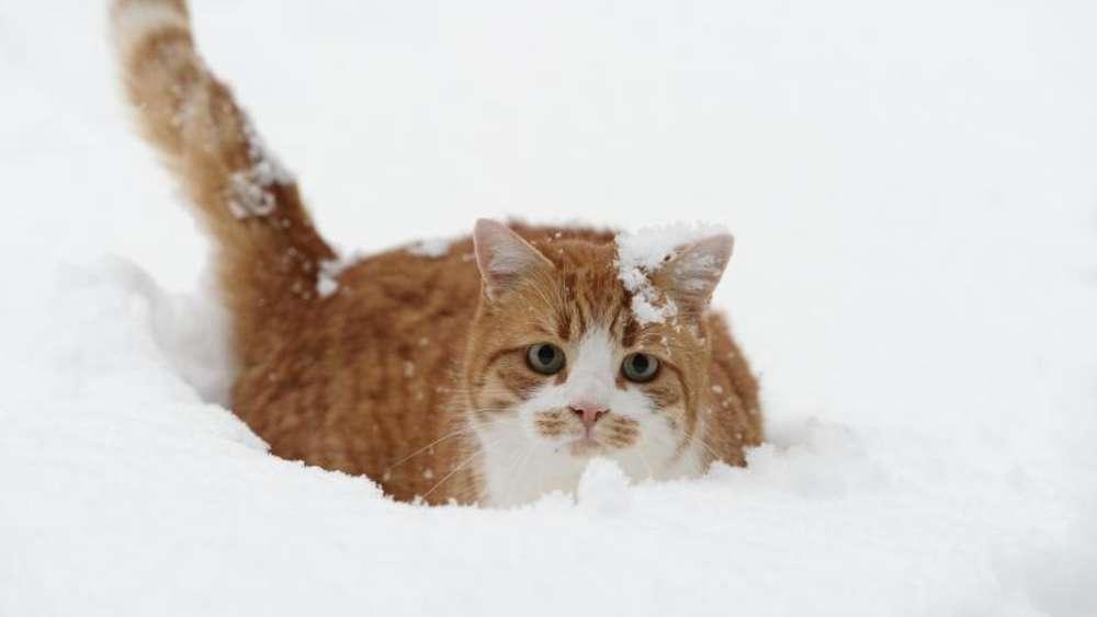 freig nger katzen brauchen im winter eine schutzh tte tiere. Black Bedroom Furniture Sets. Home Design Ideas