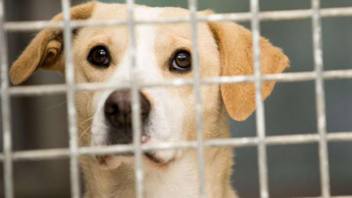 Adoptieren Statt Kaufen Tieren Ein Neues Zuhause Schenken Tiere