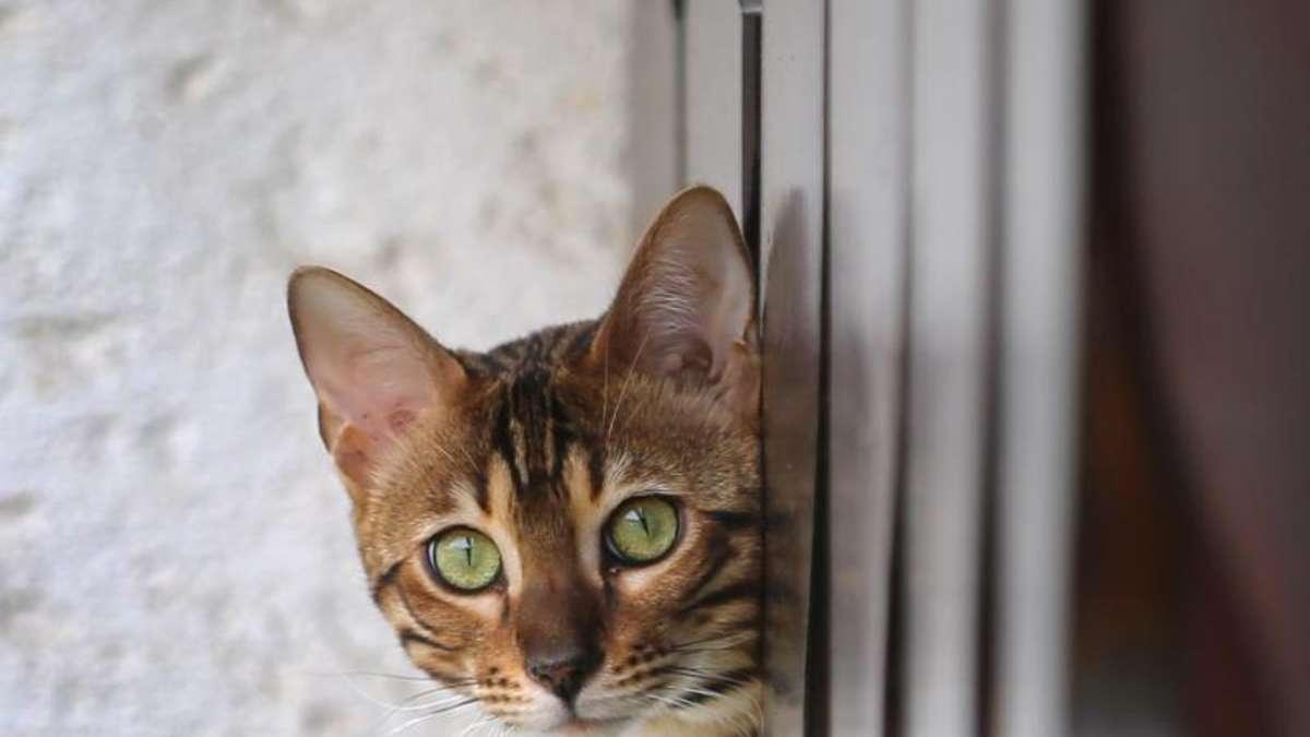 schnelle hilfe geschwollenen katzenbiss untersuchen lassen tiere. Black Bedroom Furniture Sets. Home Design Ideas