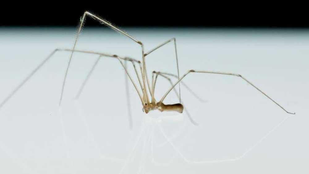 natursch tzer werben f r mehr toleranz gegen ber spinnen tiere. Black Bedroom Furniture Sets. Home Design Ideas