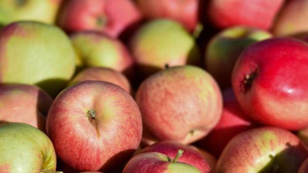 Wissenschaft - Studie: Über 100 Millionen Bakterien pro Apfel