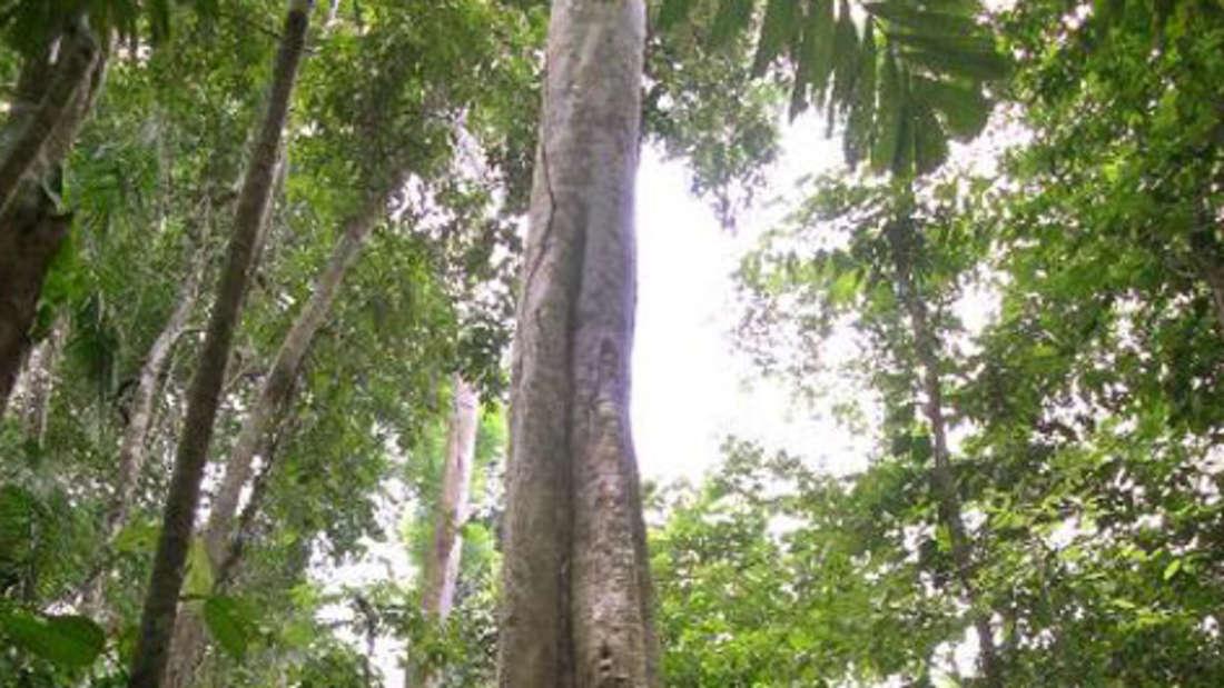 Baum Kohlenstoff