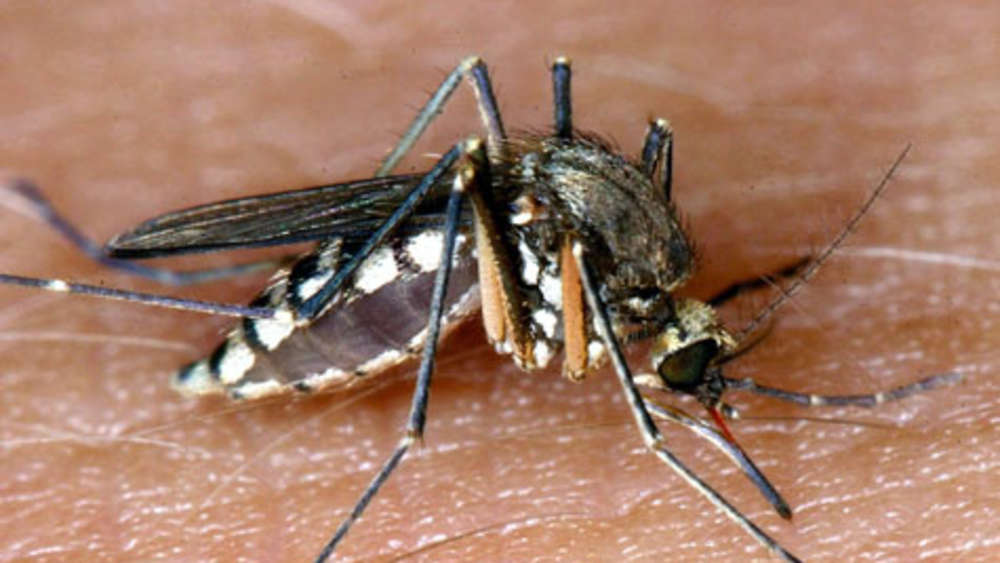 Stechmücken Licht mücken forscher testen vorlieben der blutsauger bayern
