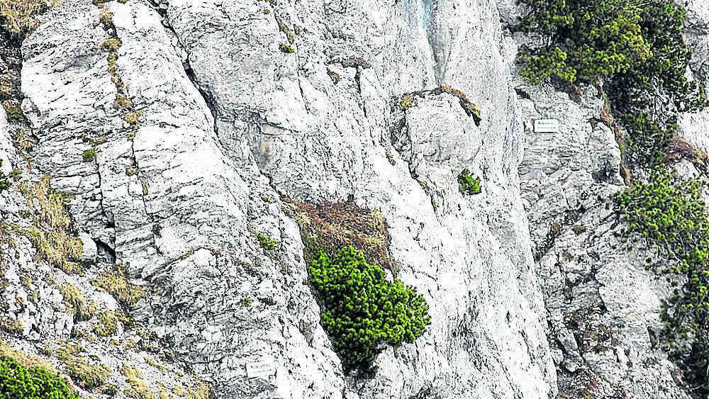 Pidinger Klettersteig : Verirrt handy hilft münchner am pidinger klettersteig stadt münchen
