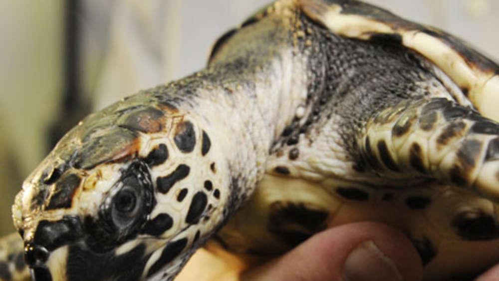 Zoll Beschlagnahmt Fast 100 Wertvolle Schildkröten Bayern