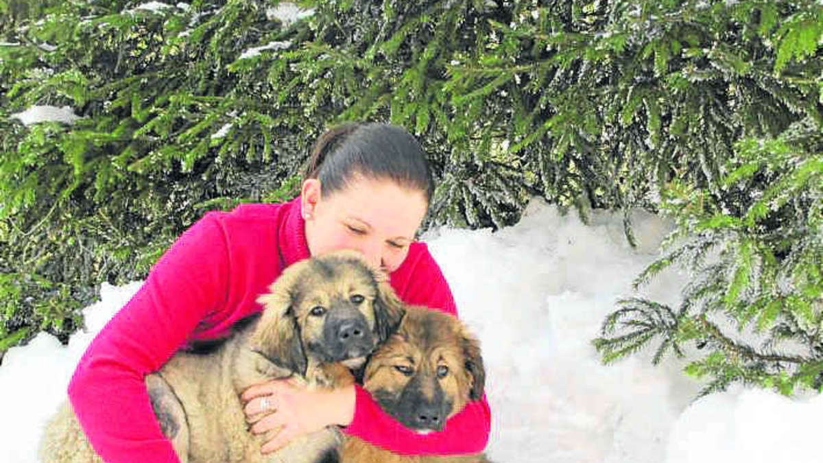 Hilfsaktion F 252 R Hunde Rettung Vor Dem Hungertod Bayern