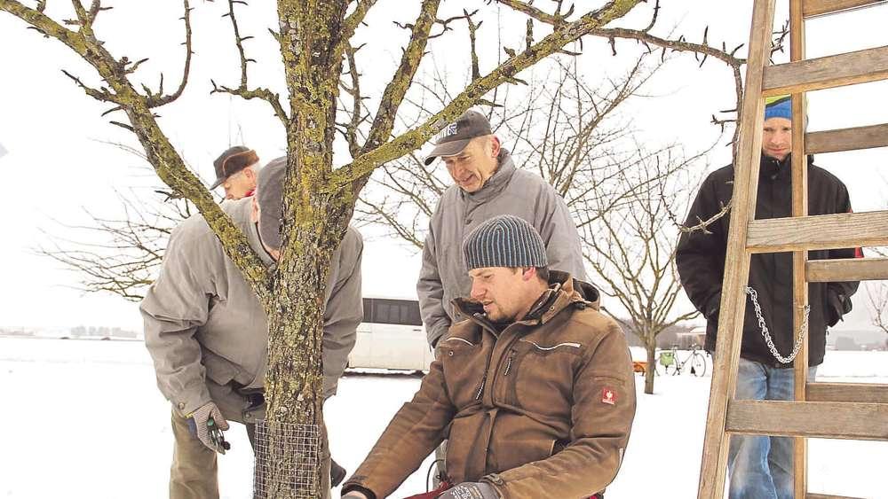 Obstbaume Richtig Schneiden Furstenfeldbruck