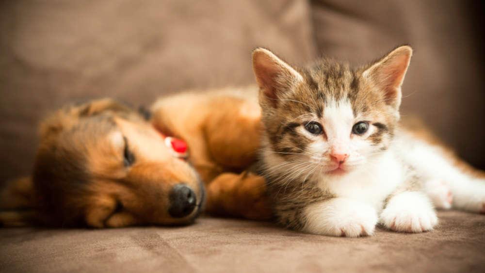 Haustiere In Der Wohnung Kennen Sie Ihre Rechte Wohnen