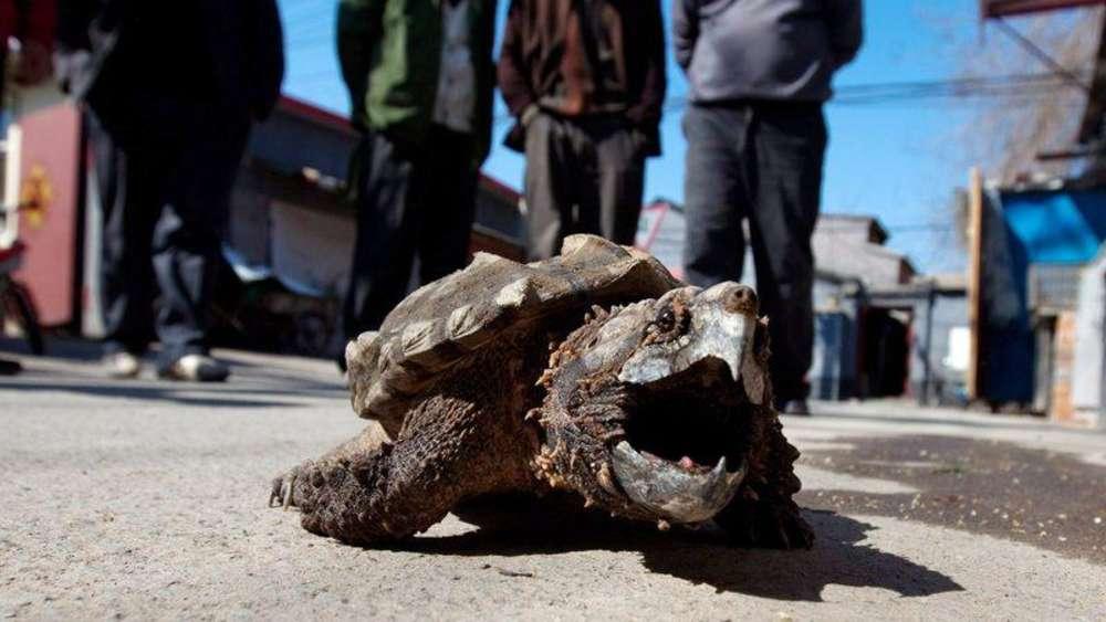 Rummel Um Schildkröte Lotti In Irsee Nimmt Ab Suche Geht Weiter