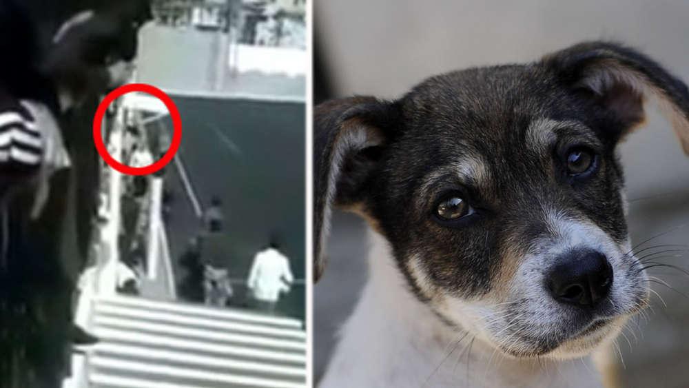 Youtube Video Fussball Fan Wirft Hund Nach Schiedsrichter