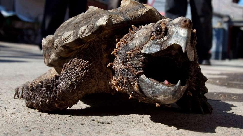 Schildkröte Lotti Suche Nach Phantom Vom Irsee Vor Ende Bayern