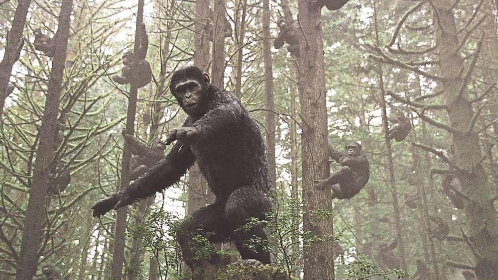 Primaten und Politik | Kino