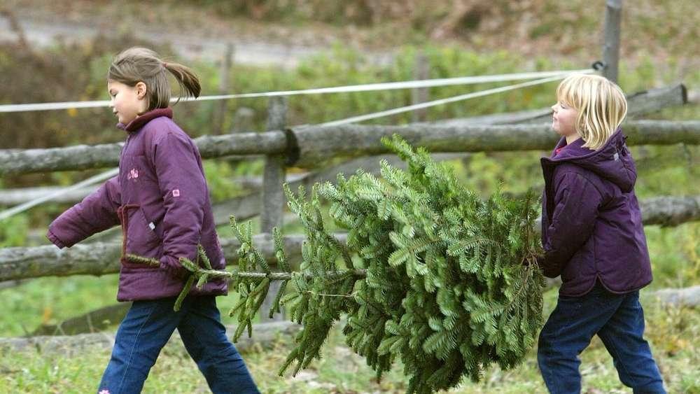 Tannenbaum Preise.Preise Für Weihnachtsbäume Bleiben Stabil Wirtschaft