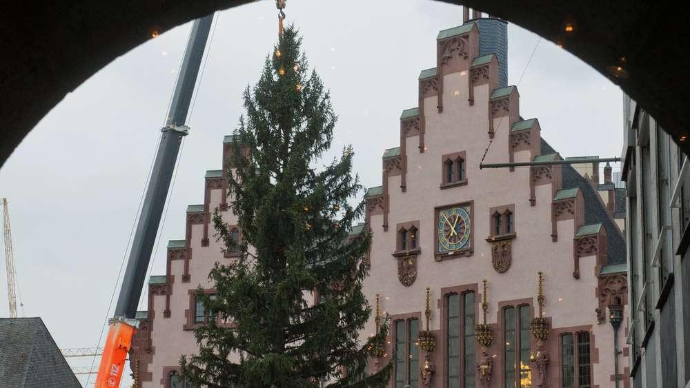 Größter Tannenbaum Deutschlands.Wo Steht Der Größte Weihnachtsbaum In Deutschland Frankfurt