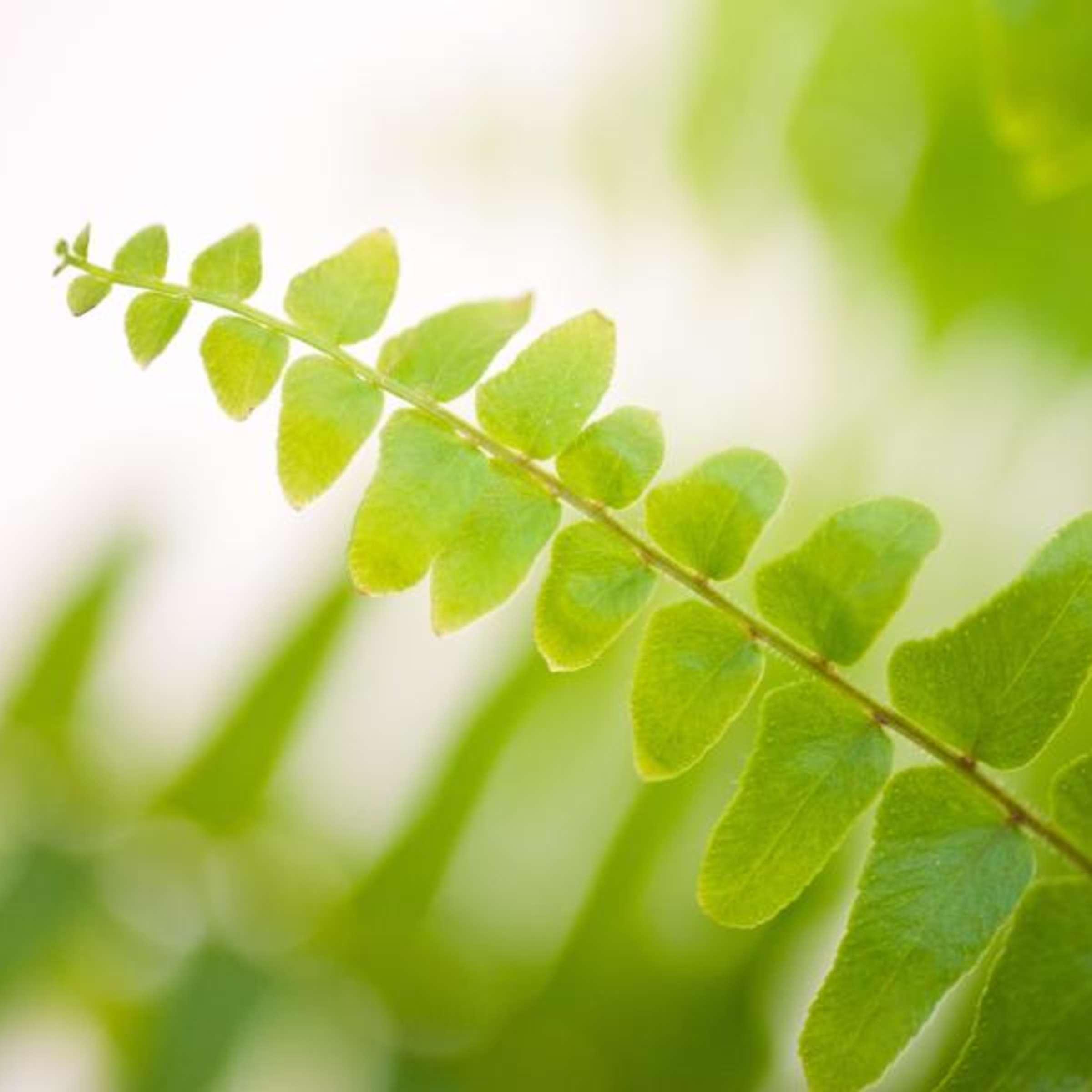 Standort Badezimmer Viele Pflanzen Mogen Es Feucht Wohnen