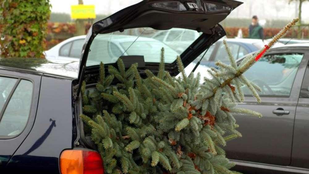 Auto Weihnachtsbaum.Weihnachtsbaum Transport Mit Dem Auto Typische Fehler Leben
