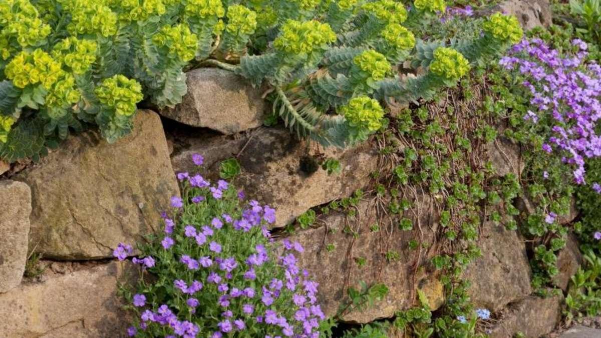 Bepflanzte trockenmauer im garten bauen wohnen - Trockenmauer im garten ...