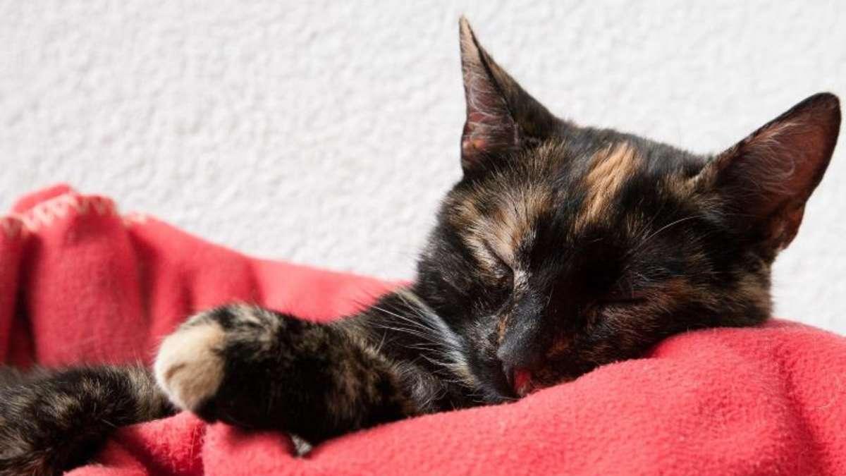 Von Korb bis Kratzbaum: Neun Basics für die Katze   Tiere