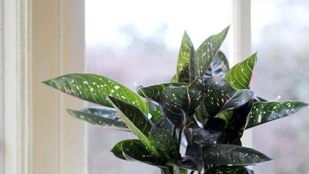 Feng Shui Pflanzen grünes feng shui: pflanzen mit runden blättern wählen | wohnen