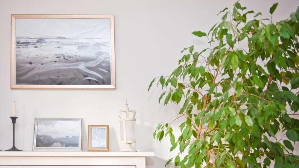 Grün In Der Wohnung Pflanzen Richtig Positionieren Wohnen