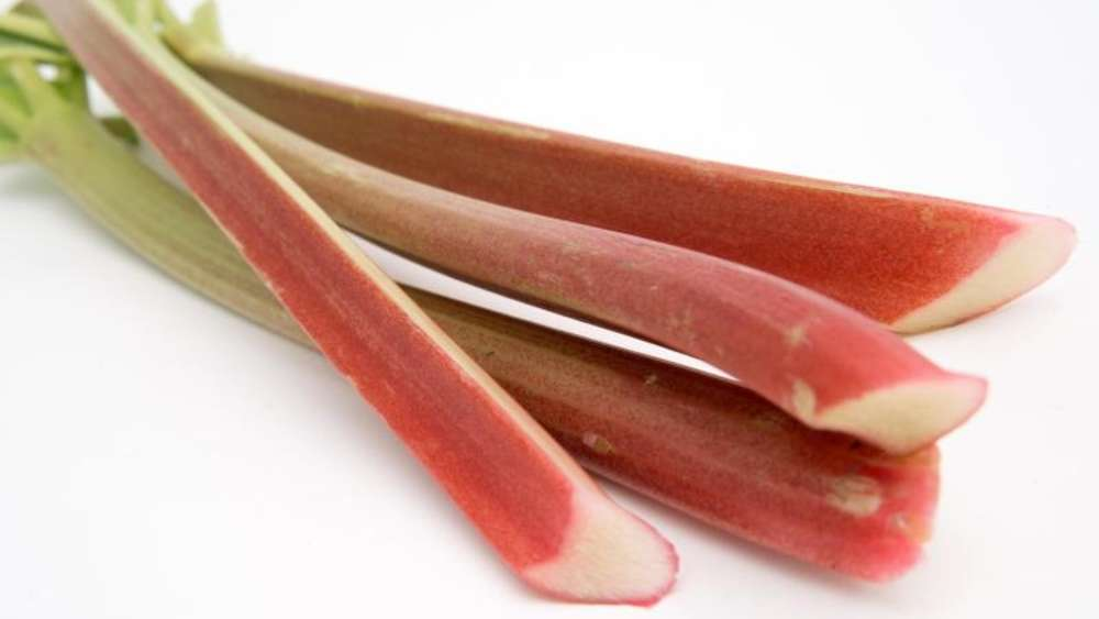 fruchtiges gem se roter rhabarber ist lieblicher genuss. Black Bedroom Furniture Sets. Home Design Ideas