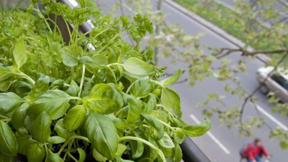 Balkonpflanzen Dekorativ Mit Gemüse Und Kräutern Mischen Wohnen