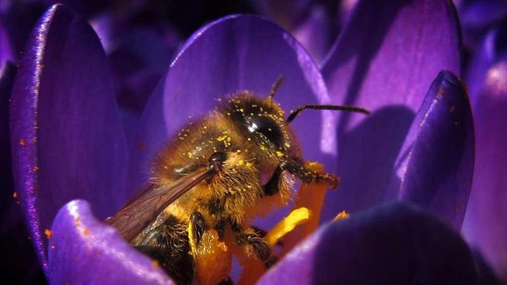 nikotin hnliche wirkung bienen fliegen auf insektizide tiere. Black Bedroom Furniture Sets. Home Design Ideas