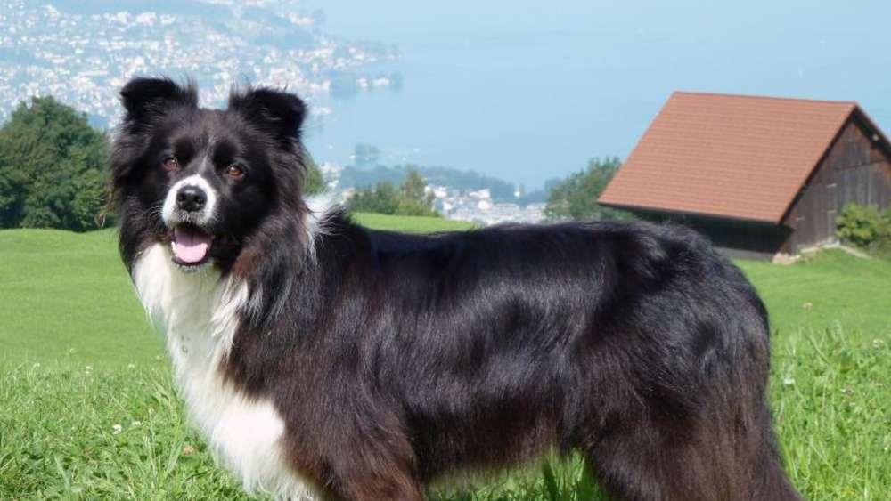 Gewitter Im Gehirn Epilepsie Beim Hund Tiere