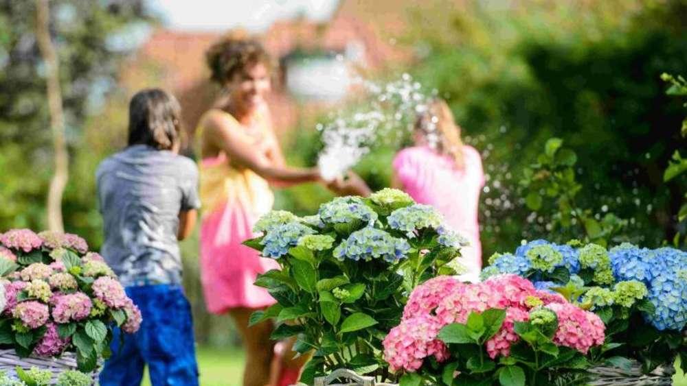 Farbenfrohe Kombination Mit Hortensien Den Garten Aufpeppen Wohnen