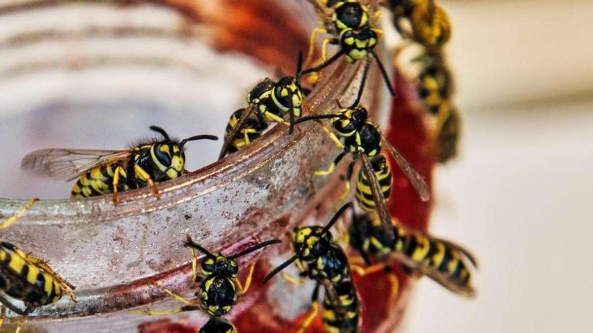 fliegen m cken wespen plagen an hei en tagen loswerden wohnen. Black Bedroom Furniture Sets. Home Design Ideas