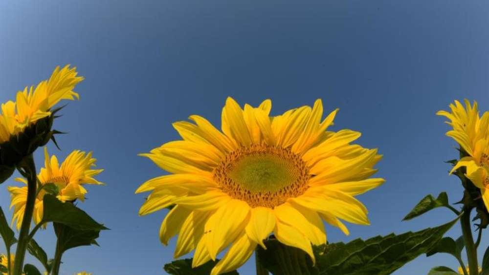 Garten blumen  Zeit zum pflücken - Blumen im Garten frühmorgens abschneiden | Wohnen