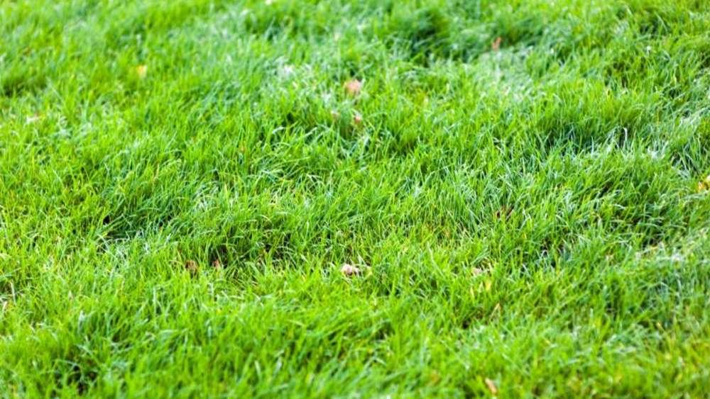 Herbstanfang Im Oktober Den Rasen Vertikutieren Wohnen