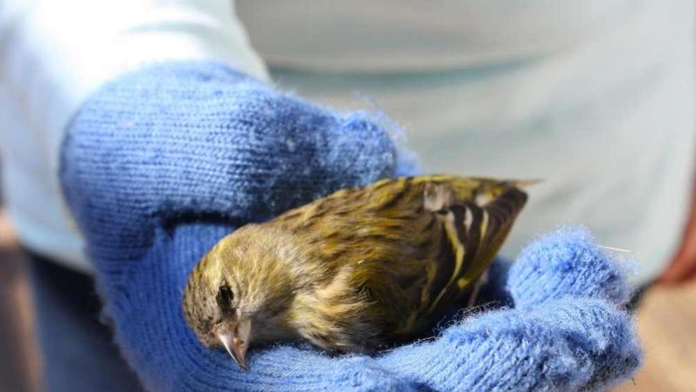 Vogel Prallt Gegen Fenster Aufkleber Bieten Wenig Schutz