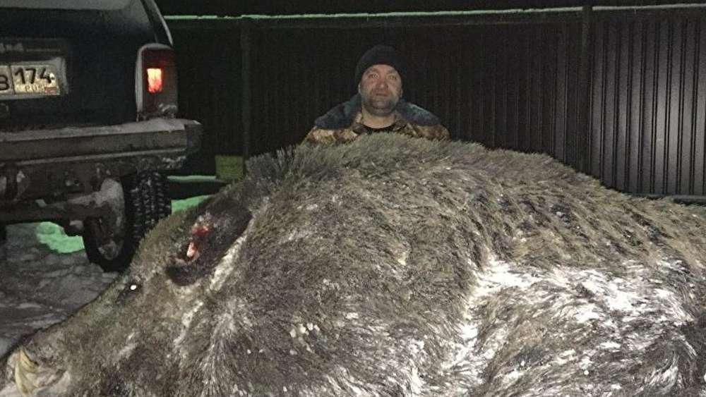 500 Kilo Wildschwein Experte Hat Verblüffende Erklärung Welt