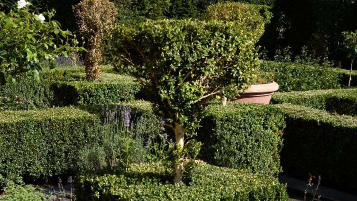 buchsbaum leidet unter plagen - alternative suchen | wohnen