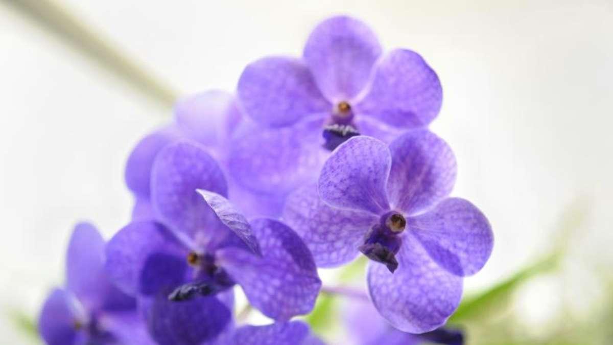 orchideen brauchen im fr hling extra pflege wohnen. Black Bedroom Furniture Sets. Home Design Ideas