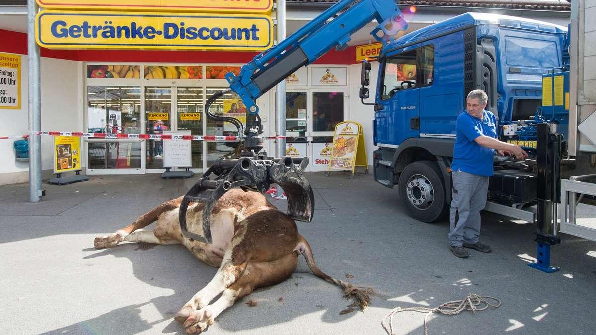 Bulle in Eggenfelden in einem Supermarkt erschossen: So gefährlich ...