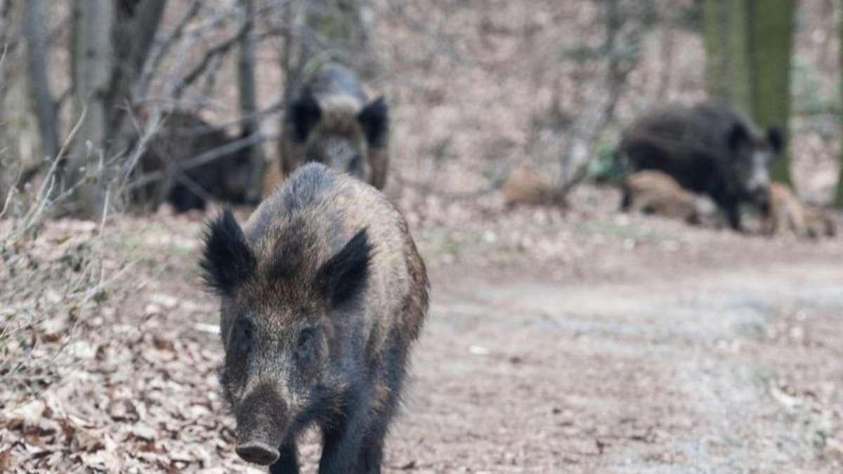 wildschweine im garten - vermieter muss zaun reparieren | wohnen