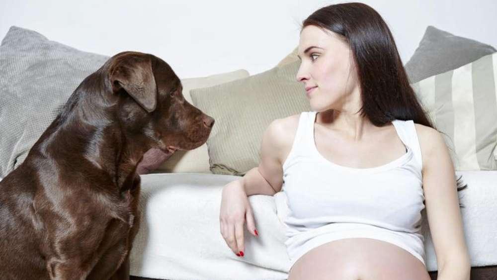 kann man von einem hund schwanger werden
