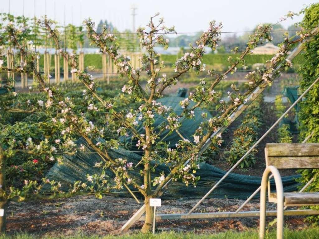 Apfelbaum Pflanzen Das Mussen Sie Zu Abstand Standort Und