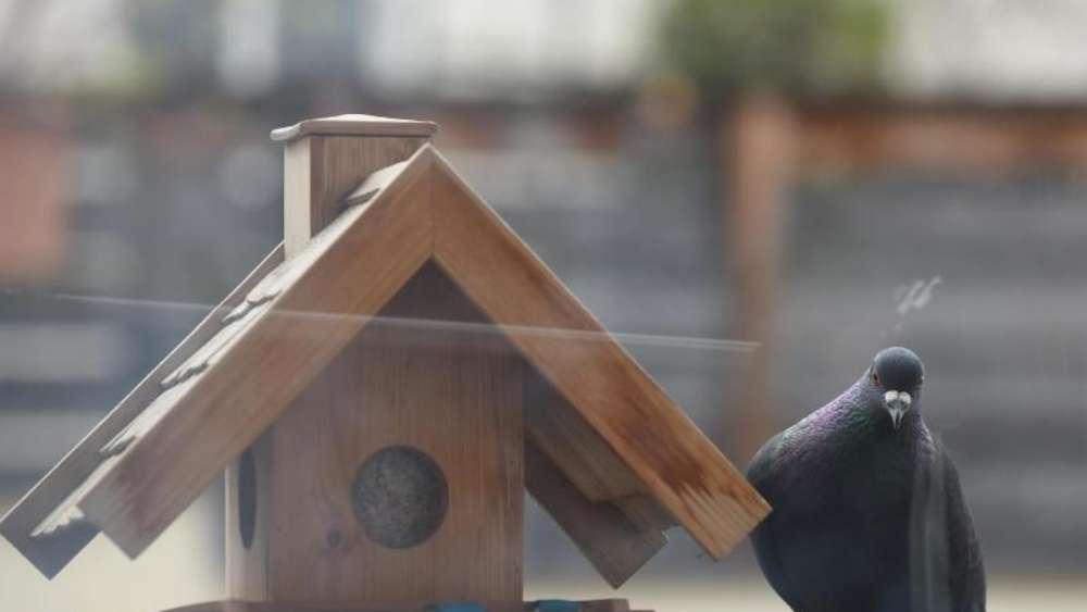 eigent mergemeinschaft kann vogelfutter auf balkon verbieten wohnen. Black Bedroom Furniture Sets. Home Design Ideas