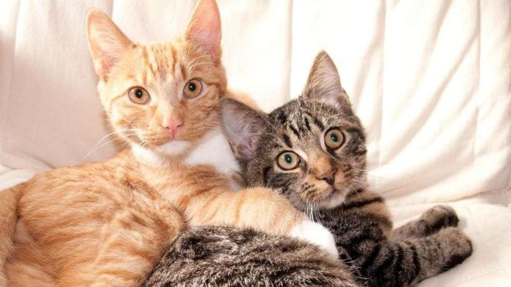 Hund und Katze aneinander gewöhnen   ZooRoyal Magazin
