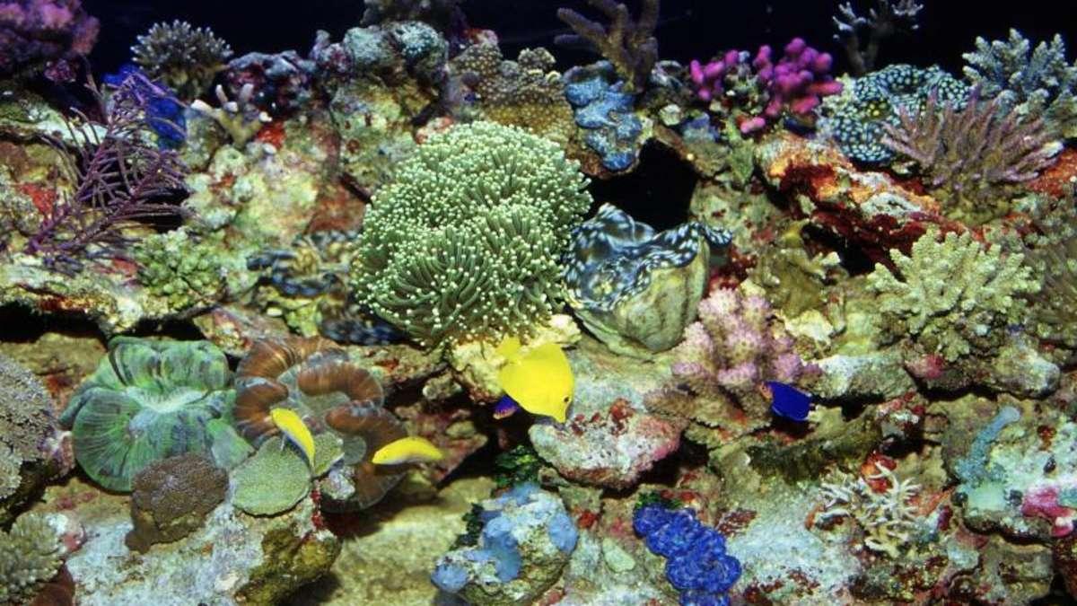 lebende steine sind ein hingucker f rs aquarium tiere. Black Bedroom Furniture Sets. Home Design Ideas