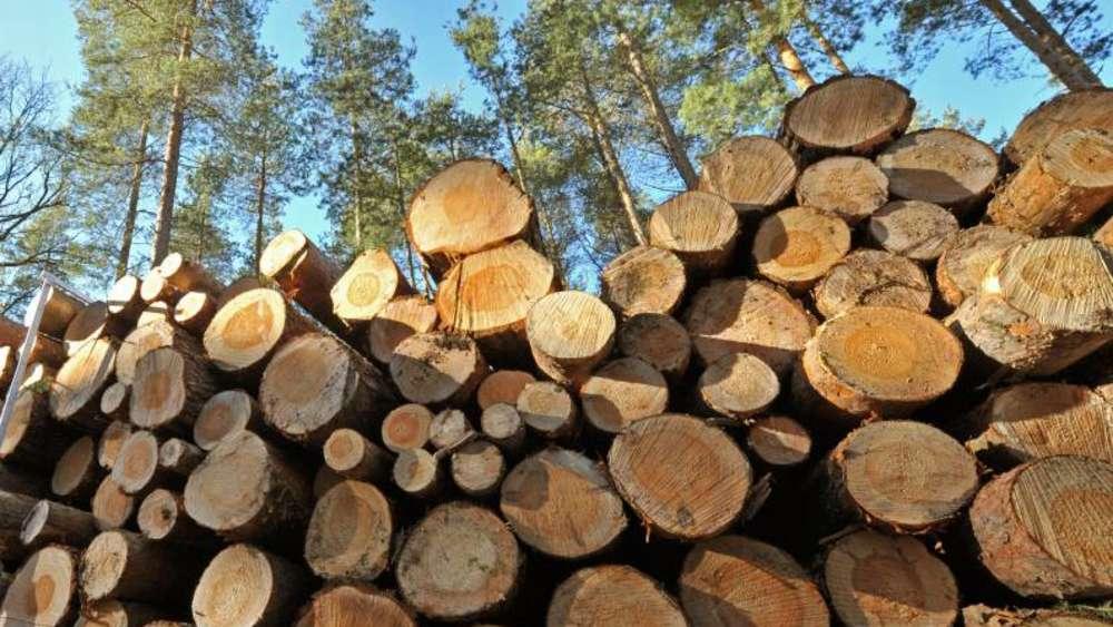 Der Käfer Nagt Am Holzpreis Waldbesitzervereinigung Pähl