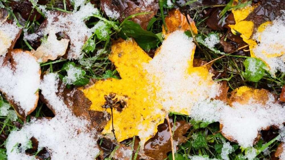 Besser Laub Als Zweige Zum Winterschutz Fur Pflanzen Nutzen Wohnen